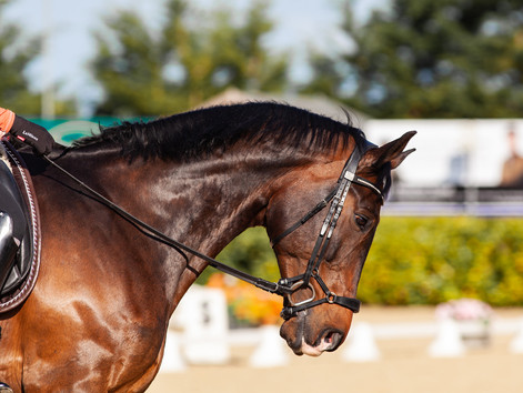 Improve your horse's topline - a 4-week program