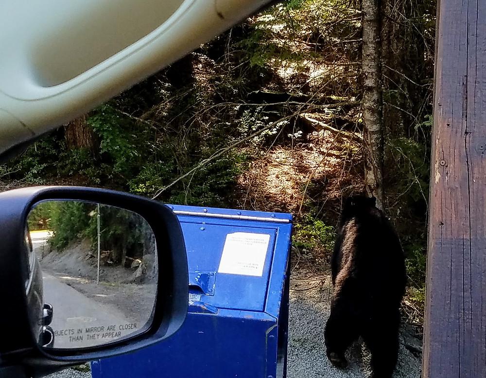Notice the BEAR!