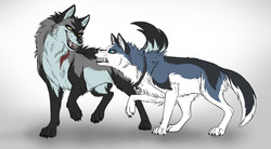 Challenging Wolves
