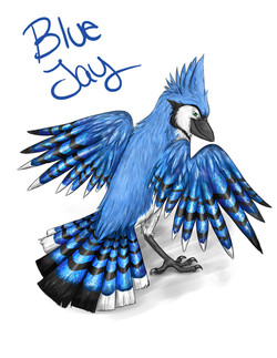 Blue Jay Design
