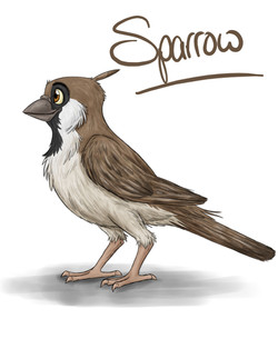Sparrow Design