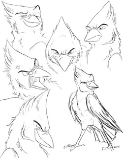 Blue Jay Sketches