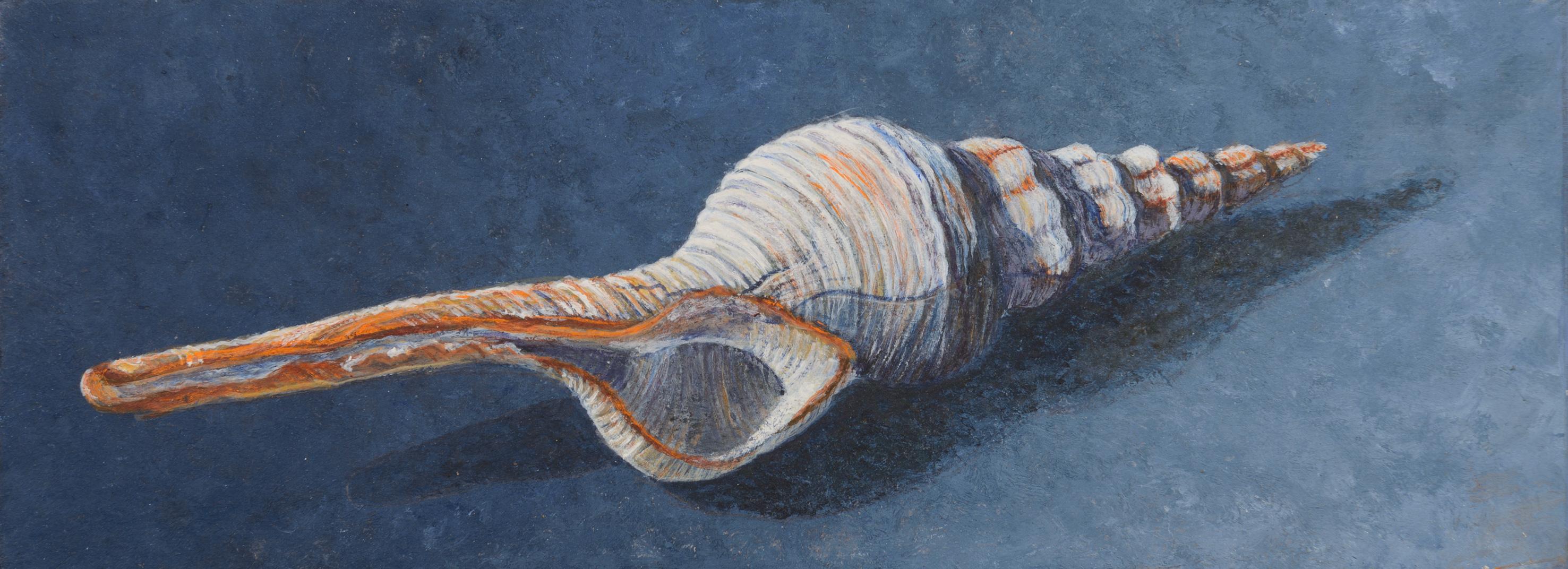 Fusinus 7x20 cm