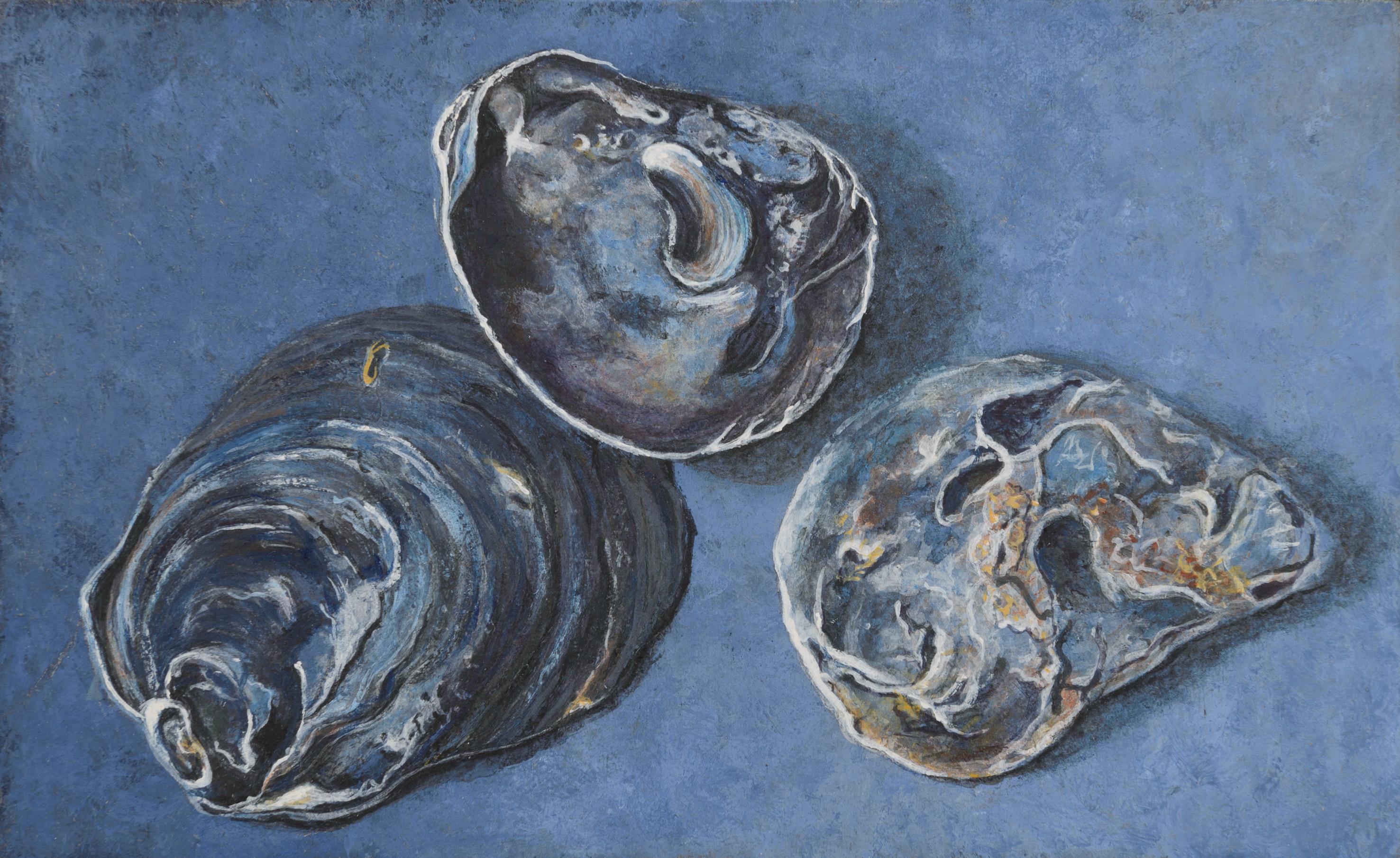 Ostrea I  (oesters) 8.5x14 cm