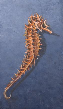 Hippocampus (zeepaard) 11x7 cm