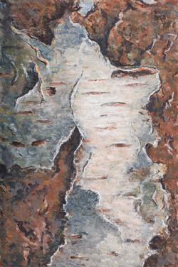 Betula III  (berk)  15x10 cm