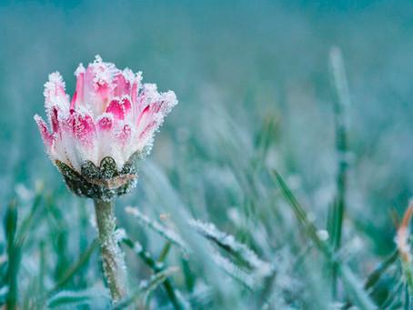 Frühling auf UNSERER POSTALM