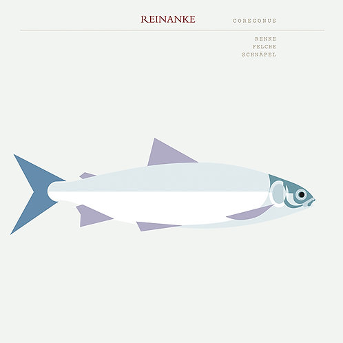 Salzkammergut - Reinanke