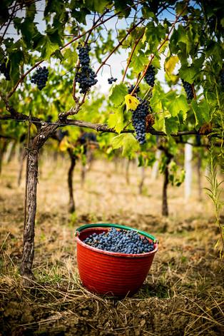 TavolagoAG_VillaBagnolo_Bagnolo_Italy_Wi