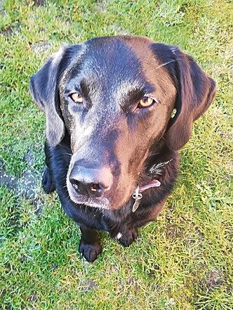 Dog Training Farnham