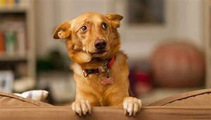 Understanding our Dogs - Basic Dog Body Language – Calming Signals