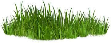 grass_clipart.jpg