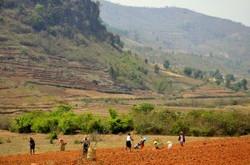 Kalaw Farmland