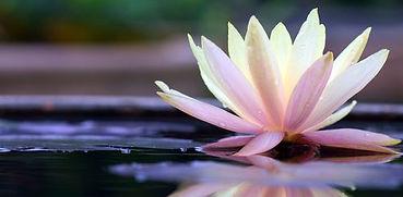 Fleur de Lotus, féminin, initiatik Yoga