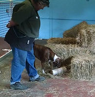 dog sniffing a tube in barn hunt with handler