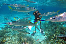 negril_jamaica_snorkeling.png