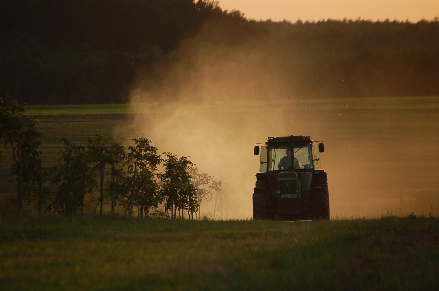 2012 07 18 Csipkerek, az ültetvény lombt