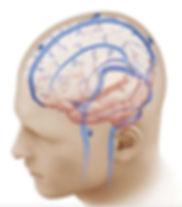 Veias ponte do cérebro