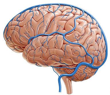 Veias pontes cerebrais