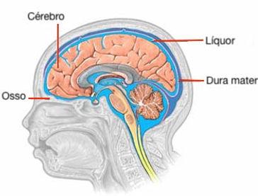 Circulaçao do liquor no cranio