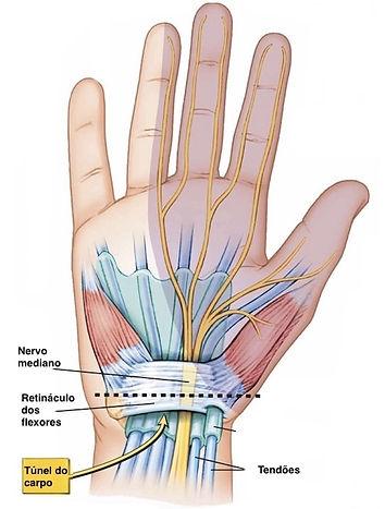 anatoiado retinaculo dos flexores e nervo mediano na sindrome do tunel do carpo
