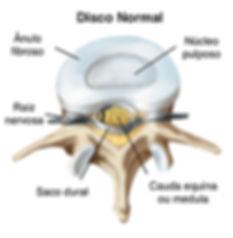Anatomia do disco intervertebral
