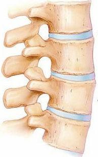 Anatomia da coluna e vértebra e discos intervertebrais