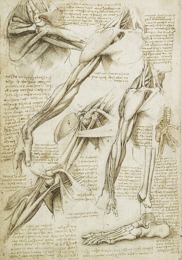 Anatomy.jpeg