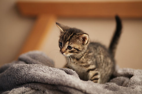 Cute little kitten on bed. Caring for pe