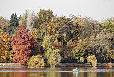autumn-4620230_1920.jpg