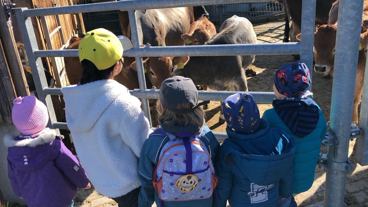Besuch bei den Kühen