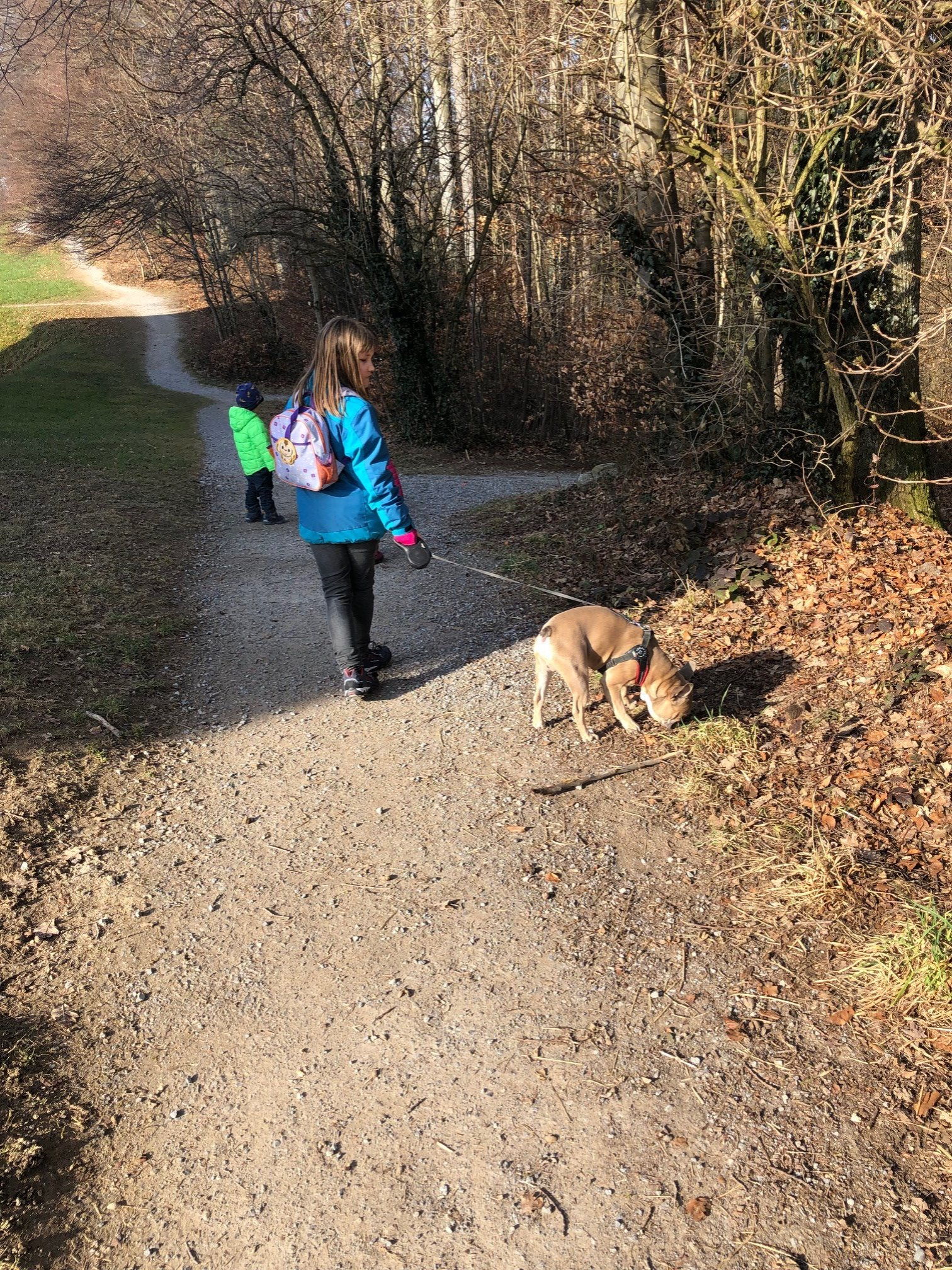 Spaziergang mit Maxwell