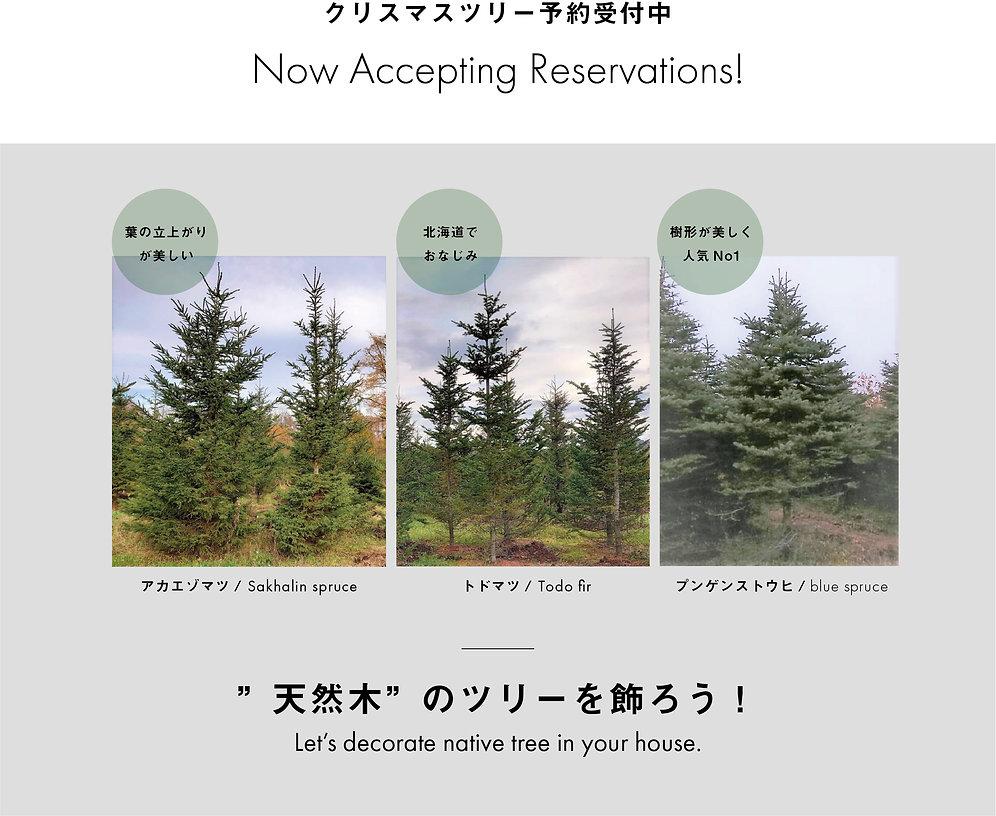 クリスマスツリー予約開始 WEB用POP.jpg