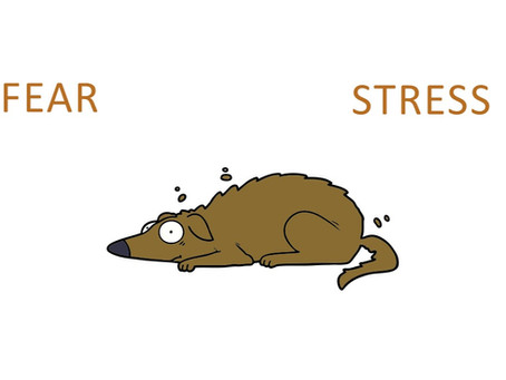 Your Dog's Brain, Fear and Stress