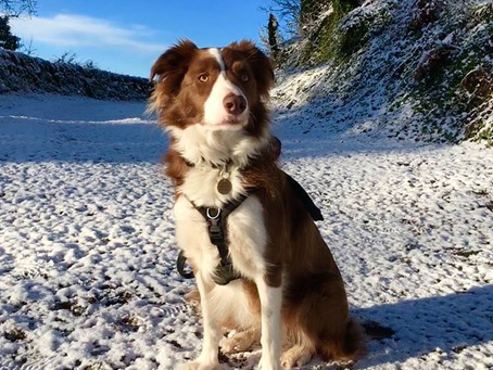 When Dog Training Works - Dave's Story