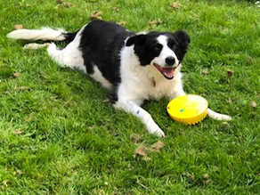 Preparing your rescue dog for the easing of restrictions