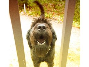 Barking at Boundaries
