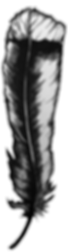 huia feather.png