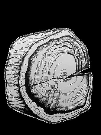 wood wedge.png