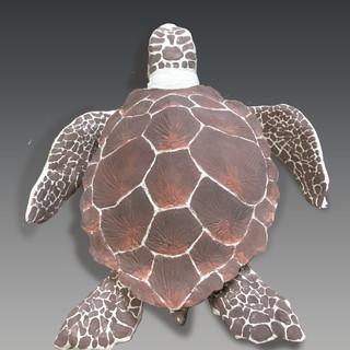 Sea Turtle View 2