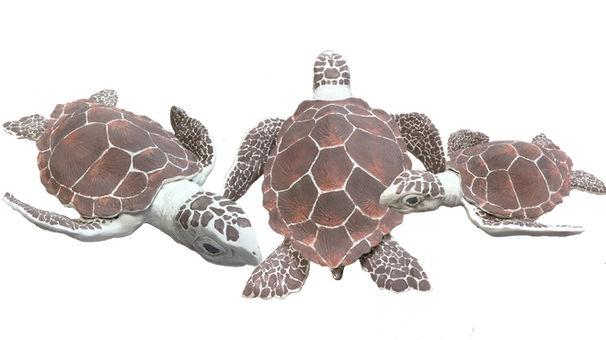 susy-turtles.png