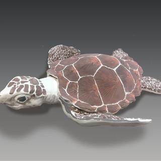 Sea Turtle View 1