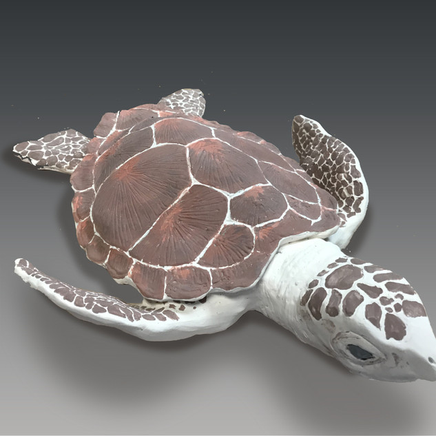 Sea Turtle View 3