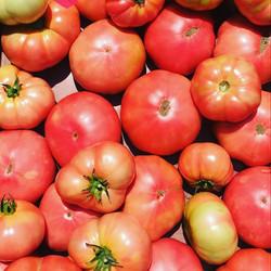 Tomate Ancestral