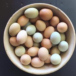 Huevos de Campo Libre