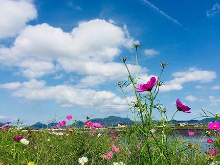 香川 ため池風景 秋