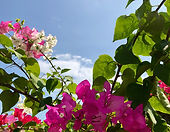 Bougainvilla - Vuokraa Huvila Thaimasta