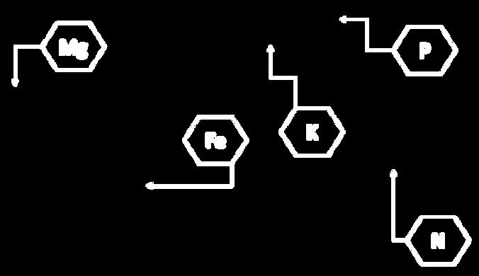 formula-arandano.png