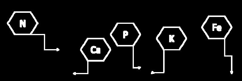 formula-banano.png