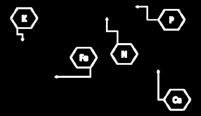 formula-arroz.png